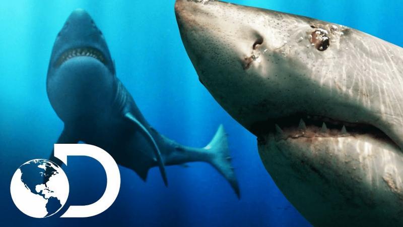 A Lenda do Tubarão Gigante